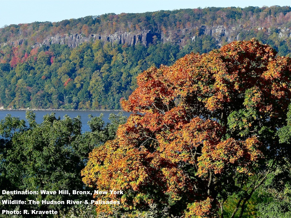 Hudson River and the first fall color from Wave Hill, Bronx, New York IMAGE: ©R. KRAVETTE