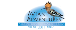 avian logo 3.jpg