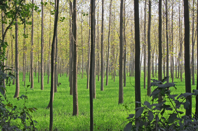 Supporting tree farms is one way companies try to balance their carbon footprint         Image: Tree farm  ©Digitalfestival ⎮Dreamstime.com