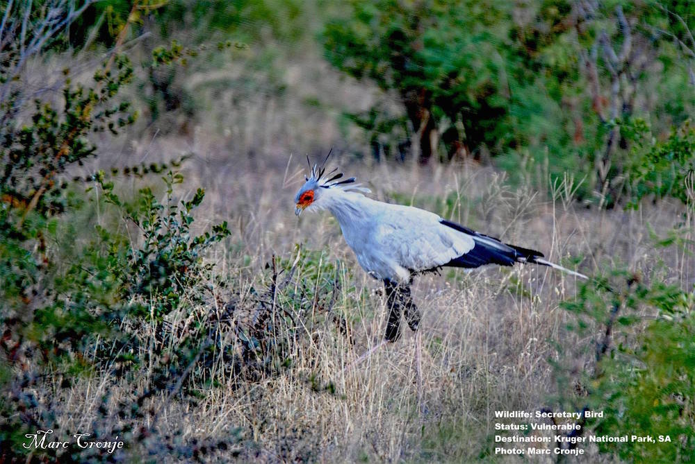 MC Secretary Bird Napi Flat Rocks  13227280_10209332167164780_3176959587032401563_o.jpg