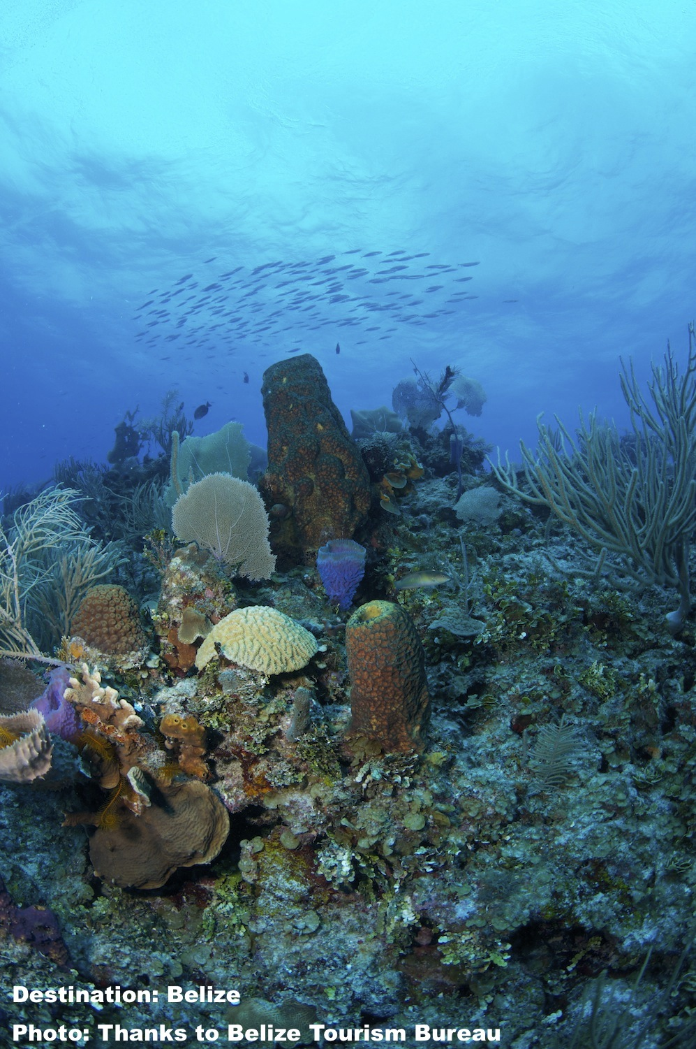 A CORNER OF THE SOUTHERN BELIZE REEF COMPLEX. IMAGE: COURTESY OF THE  BELIZE TOURISM BOARD .