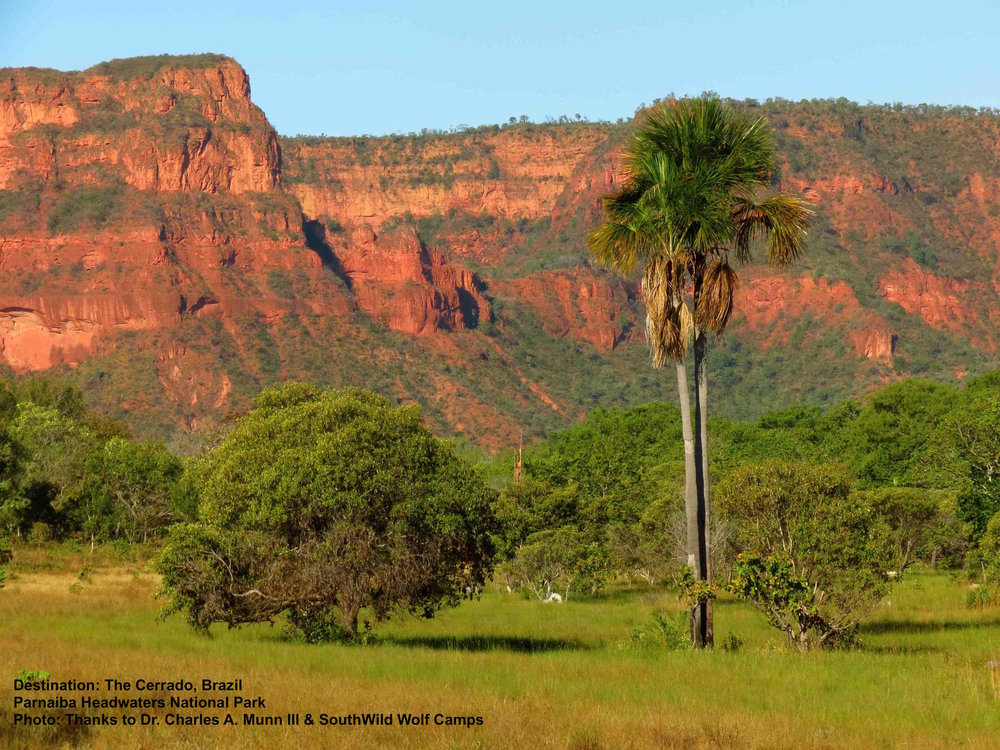 THE CERRADO'S ANCIENT AND DIVERSE ECOSYSTEM OF SAVANNA, MOUNTAINS, AND RIVERS IS HOME TO MANY ENDANGERED SPECIES BUT IS ITSELF ENDANGERED. SEE IT BEFORE IT DISAPPEARS. IMAGE: COURTESY OF DR. CHARLES MUNN III AND SOUTHWILD WOLF CAMPS, PARNAIBA HEADWATERS NATIONAL PARK