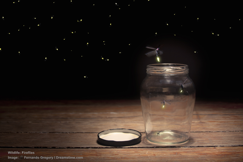 When was the last time you saw real fireflies in nature? After a day of whale shark viewing take a firefly cruise. The experience is magical. Image:  ©Fernando Gregory⎮Dreamstime.com