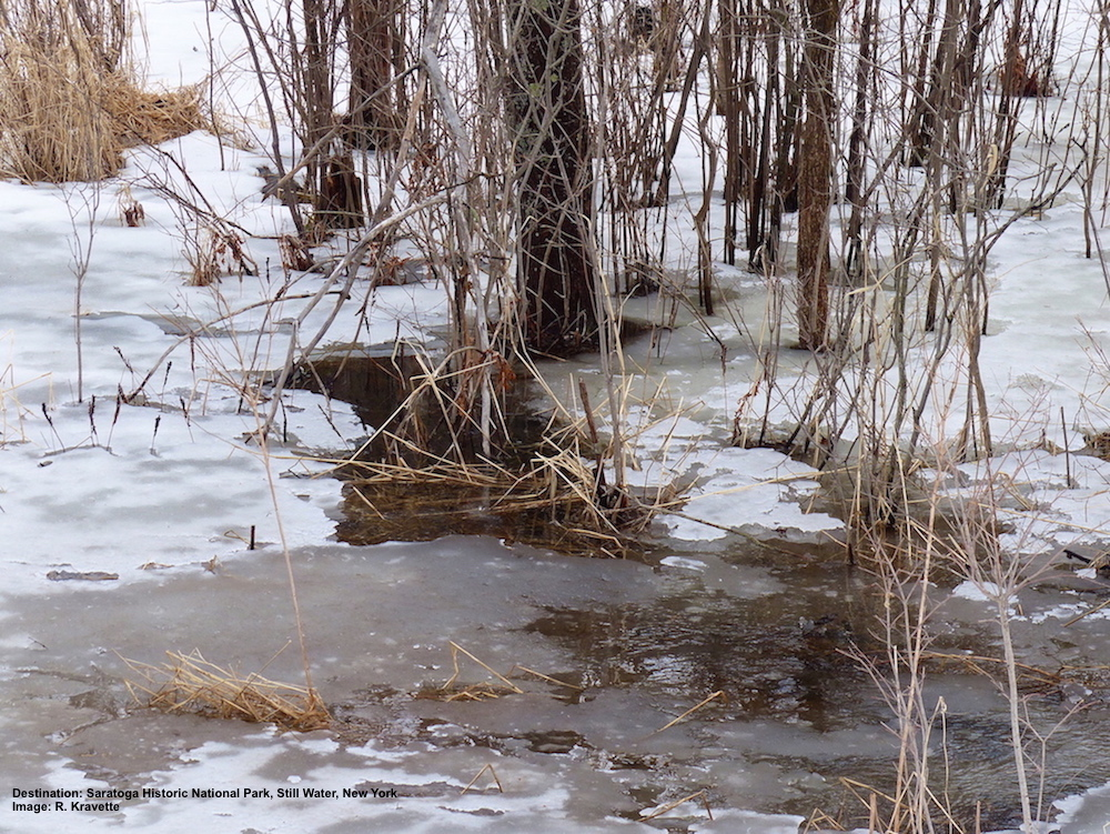 The streams were just starting to thaw. We could hear the soft sound of water running under the ice long before we came to a place where it had broken free.