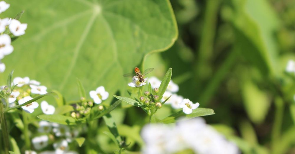 ONE GOAL OF THE GARDENS AND LANDSCAPES OF GRACE FARMS IS TO ENHANCE THE HEALTH AND WELL BEING OF THE BEES, BUTTERFLIES, BIRDS, BATS AND OTHER POLLINATORS (AS WELL AS THE HUMANS) WHO VISIT THEM. IMAGE: COURTESY OF GRACE FARMS