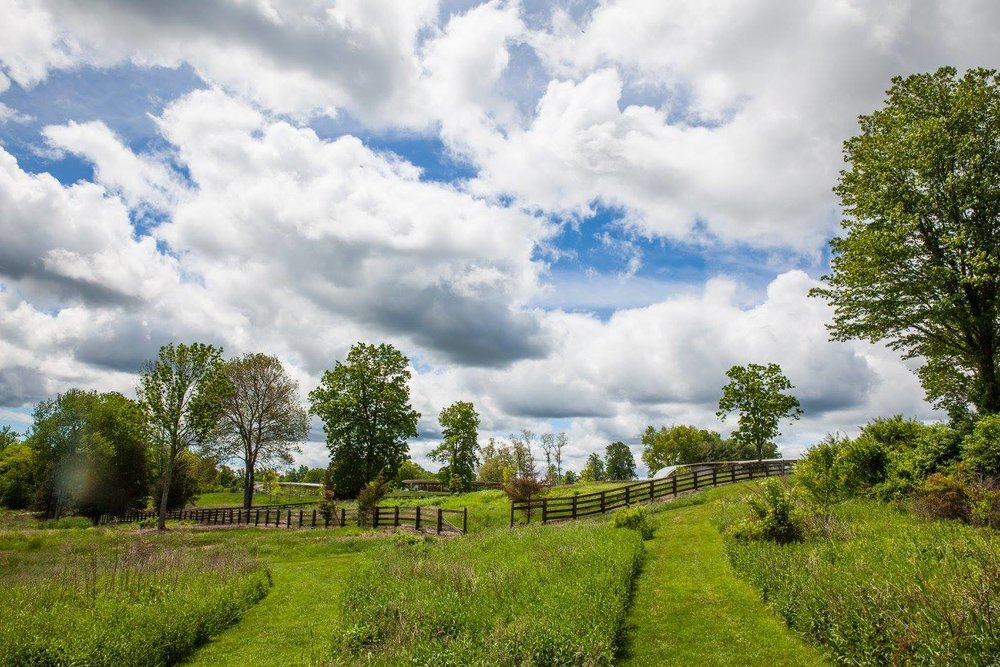 enjoy  a family hike or a solitary stroll in grace farms peaceful landscape. Image: Vanessa Van Ryzin, courtesy of grace farms