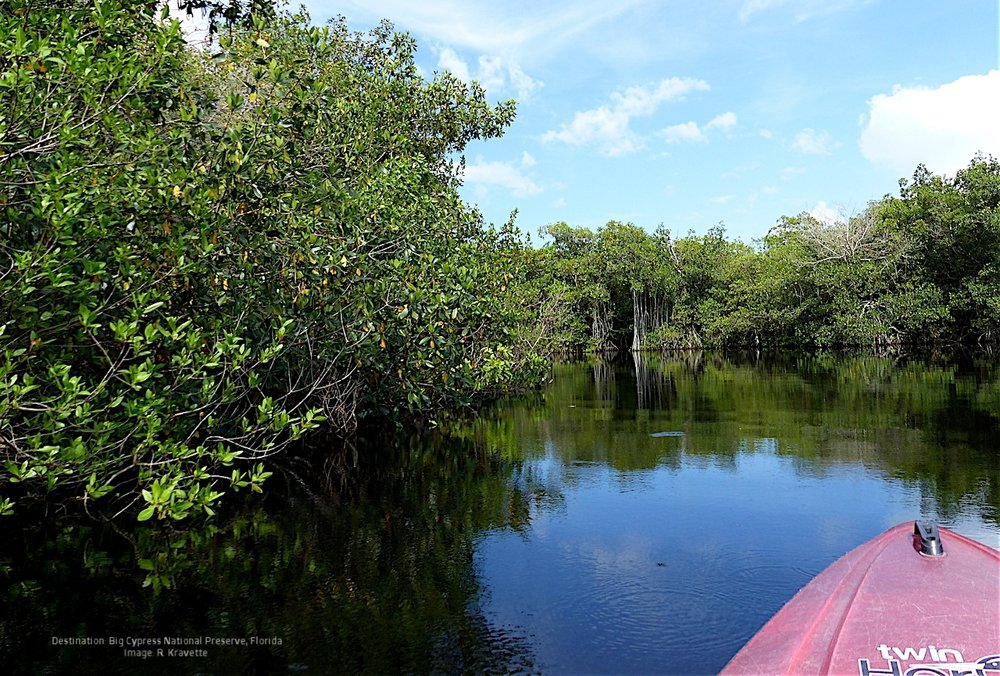THE EVERGLADES IS ACTUALLY A LARGE SHALLOW, SLOW MOVING RIVER. THE WATER IS LIKE A MIRROR. IMAGE. R KRAVETTE