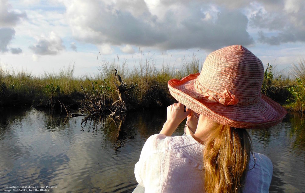 IN A KAYAK IS THE BEST WAY TO SEE WADERS & OTHER BEAUTIFUL BIRDS (ALLIGATORS TOO!). TRY A GUIDED TOUR FOR AN UNFORGETTABLE WILDLIFE EXPERIENCE. IMAGE TOD DAHLKE, TOUR THE GLADES.
