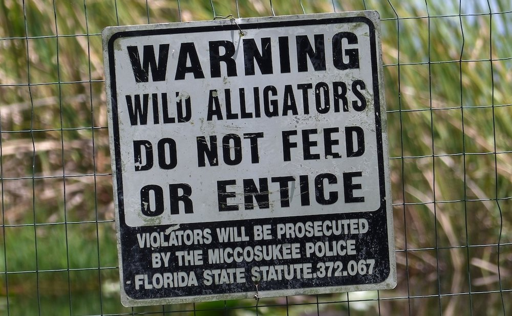 THIS PARTICULAR SIGN WAS BEHIND A RESTAURANT OUTSIDE EVERGLADES CITY, BUT THEY ARE EVERYWHERE & SERIOUS. FEEDING WILDLIFE HABITUATES THEM AND ENDANGERS BOTH HUMAN AND ANIMAL. IMAGE: R. KRAVETTE