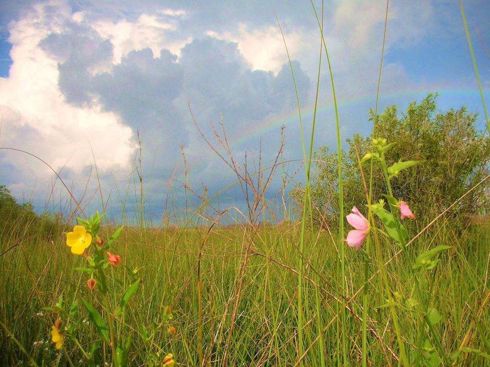 RAINBOW OVER THE WETLANDS PRARIE IN BIG CYPRESS NATIONAL PRESERVE, FLORIDA. IMAGE: COURTESY OF BIG CYPRESS NATIONAL PRESERVE.