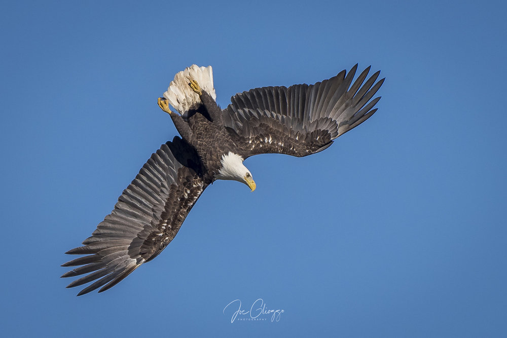 ANY DAY IS A GOOD DAY WITH OLD FRIENDS AND NEW FIRNDS WATCHING THE EAGLES SOAR. IMAGE; JOE GLIOZZO