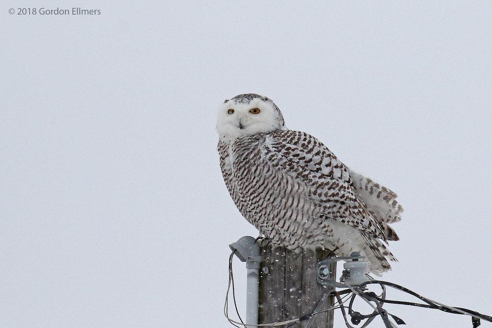 xxowl, sny hunting snow storm ft ed 10:13 020418_14.jpg