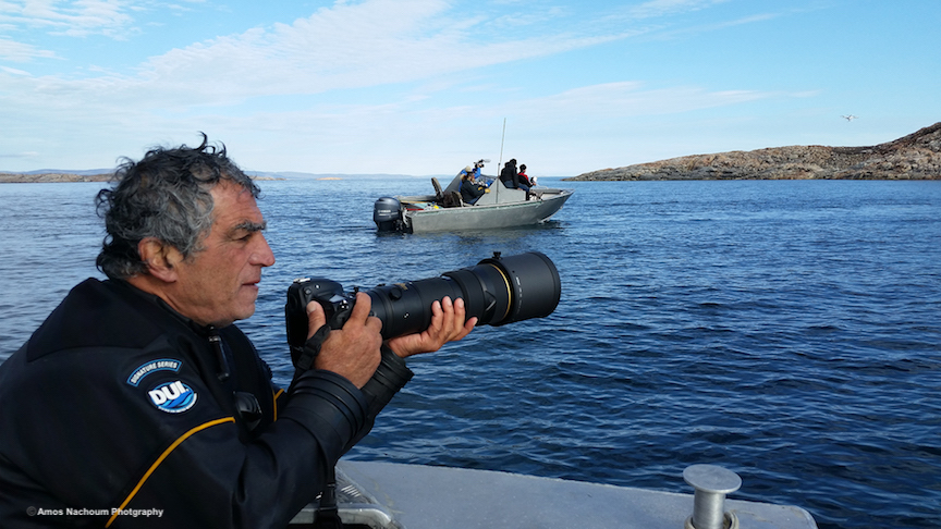 """""""HUNTING"""" FOR POLAR BEAR WITH MY LENS. THE BEAR SWIM FROM ISLAND TO ISLAND SEARCHING FOR FOOD. IMAGE: COURTESY OF ©AMOS NACHOUM PHOTOGRAPHY"""