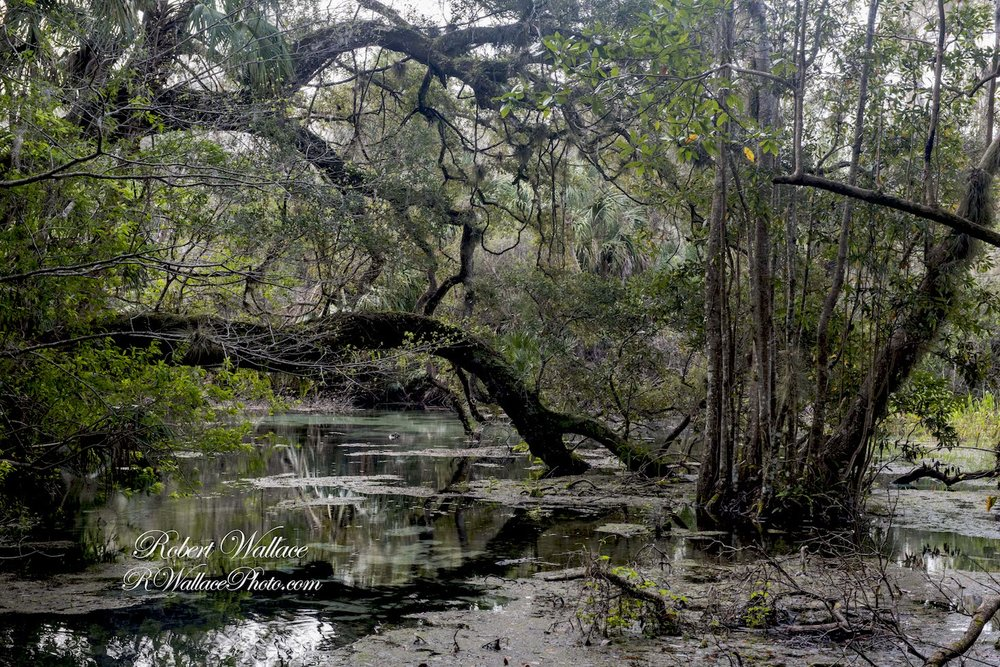 THE VIEW FROM ONE OF THE WALKING TRAILS AT RAINBOW SPRINGS STATE PARK. IMAGE: ROBERT WALLACE, RWALLACE PHOTO.COM