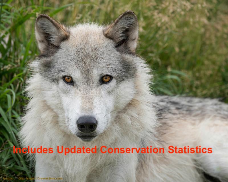 wild-wolf-watching-worldwide.jpg