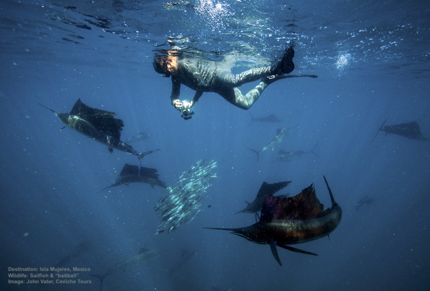 UNDERSEA ACTION AS A SMALL SCHOOL OF FISH TURN INTO A BAITBALL, THE SAILFISH SEES LUNCH AND A SWIMMER MOVES IN FOR THE SHOT. IMAGE: JOHN VATER