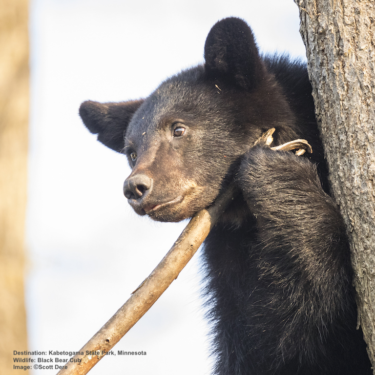 pROPER EXPOSURE IS CRITICAL FOR GREAT BEAR PHOTOGRAPHS. IMAGE: ©SCOTT DERE