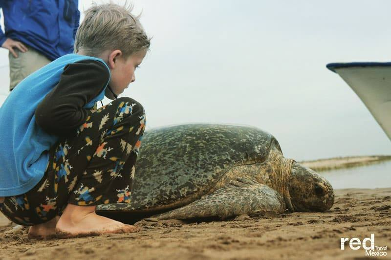 PERFECT FAMILY HOLIDAY, WHALE SHARK WATCHING AND TURTLE CONSERVATION IN LA PAZ, MEXICO. IMAGE: RED TRAVEL, MEXICO