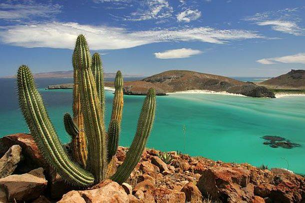 LA PAZ, BAJA CALIFORNIA SUR, WHERE THE DESERT MEETS THE SEA IS A MAGICAL PLACE. SWIM WITH WHALE SHARKS. MEET GREY WHALE CALVES. RESCUE BABY SEA TURTLES - AND BRING THE WHOLE FAMILY. IMAGE: LA PAZ MEXICO @LPSMX FACEBOOK PAGE.