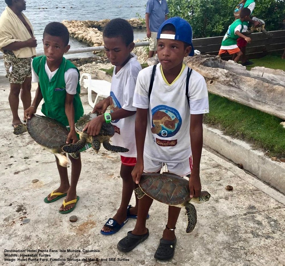 COMMUNITY INVOLVEMENT IS CRITICAL TO STOP POACHING. LOCAL KIDS ON ISLA MUCURA, COLUMBIA AT THE  HOTEL PUNTA FARO (PAGINA OFICIAL)  . THEY ARE PARTICIPATING IN A PROGRAM THAT EXCHANGES CHICKEN FOR SEA TURTLES CAUGHT BY FISHERMAN. THANKS TO THE HOTEL PUNTA FAR AND  FUNDACIO TORTUGA DEL MAR