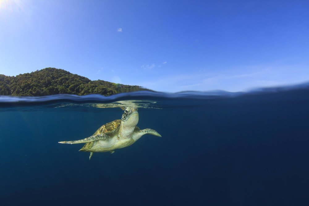 LET IT GO. DON'T BECOME ANOTHER CHALLENGE TO SEA TURTLE SURVIVAL. IMAGE: ©RICHARD CAREY