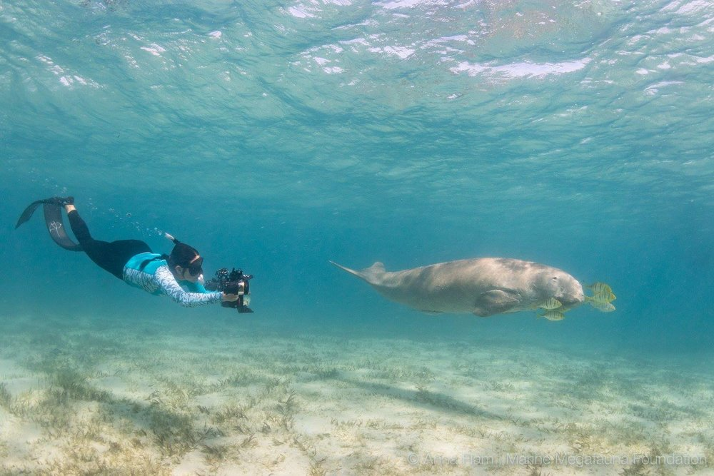 """DUBBED """"THE MANTA QUEEN' FOR HER GROUND BREAKING RESEARCH ON MANTA RAYS, THE MARINE MEGAFAUNA'S CO-FOUNDER, DR. ANDREA MARSHALL TAKES A MOMENT TO PHOTOGRAPH A DUGONG IN THE BARAZUTO ARCHIPELAGO, MOZAMBIQUE. IMAGE: THANKS NTO MARINE MEGAFAUNA FOUNDATION (FACEBOOK)"""