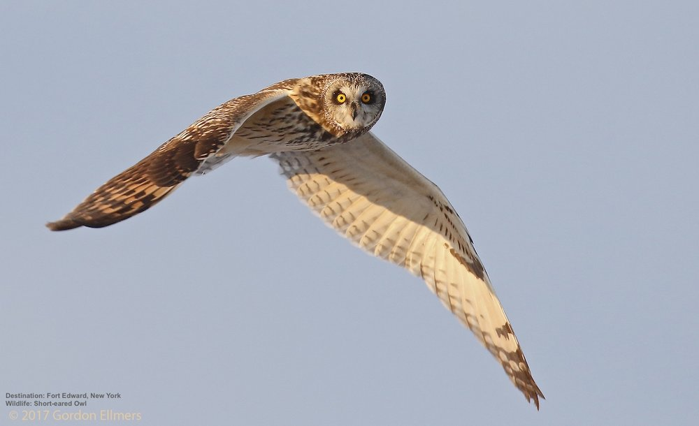 THE WASHINGTON GRASSLANDS IS CRITICAL WINTER HABITAT FOR THE ENDANGERED SHORT EARED OWLS AND OTHER SPECIES. IMAGE: GORDON ELLMERS