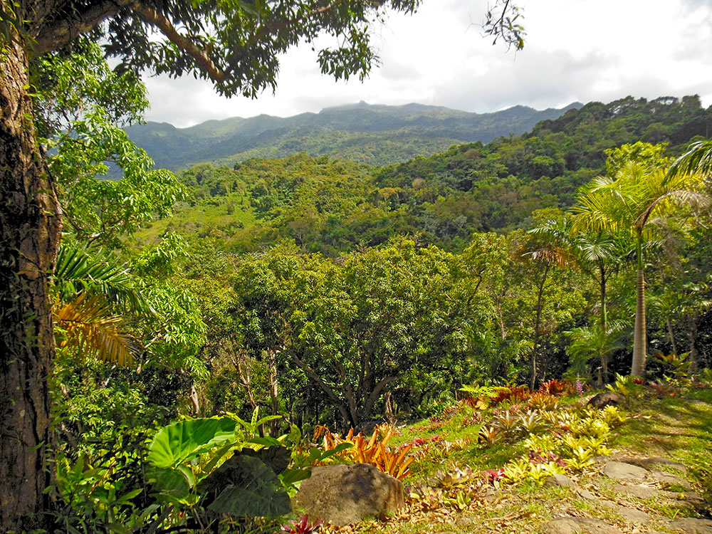 YUQUIYU SITS ON THREE-ACRES OVERLOOKING THE RAINFOREST AND THE EL YUNQUE PEAK. IMAGE: ©MARTIN HAGGLAND