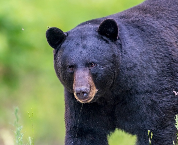 Bump Up Your Exposure! What to Do When the Bird is a bear: Image; Joe Gliozzo