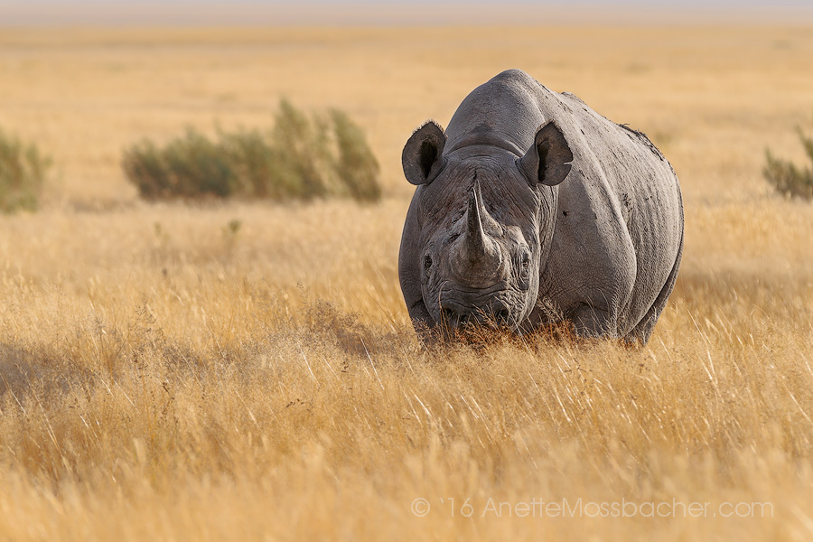 Rhinoceros_Anette_Mosbacher_Wildlife_Photography.jpg