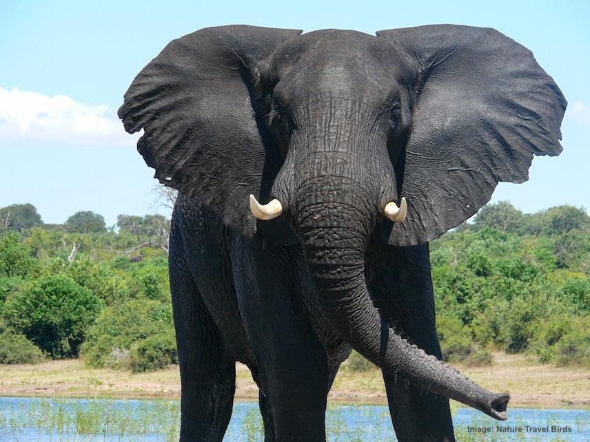 DAY 5-8: KNP, SATARA & SKUKUZA CAMP, ELEPHANT