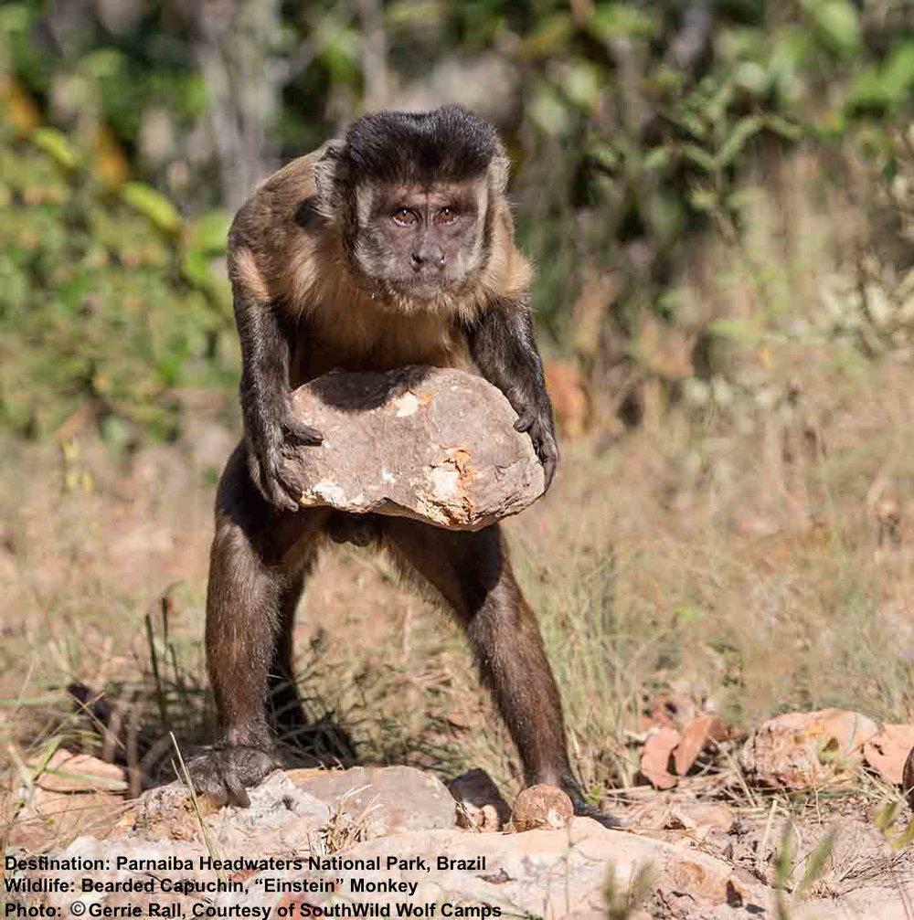 7 Not-To-Miss Animals in the Wild Cerrado