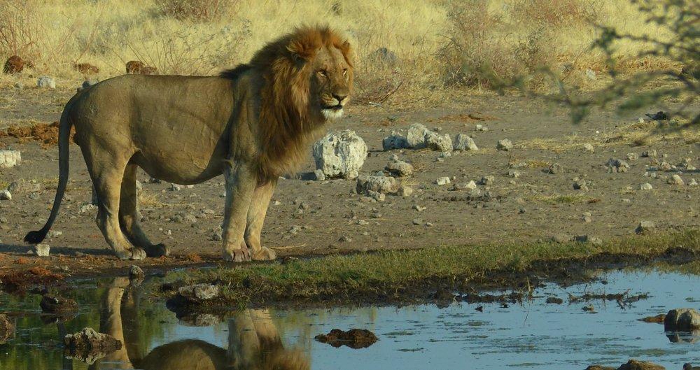 destination-wildlife-Credo.jpg
