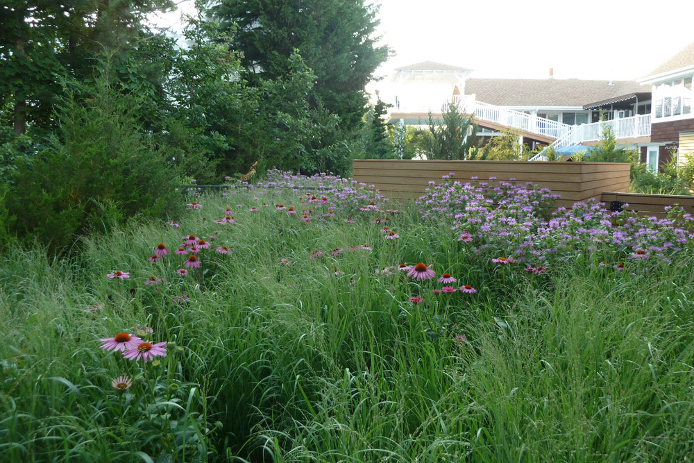 sustainable-garden-landscape-company-philly.jpg