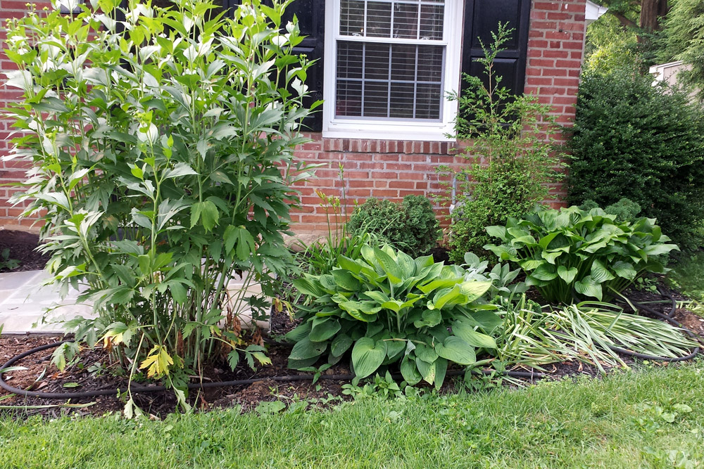foundation-planting-landscaping-philly-suburb.jpg