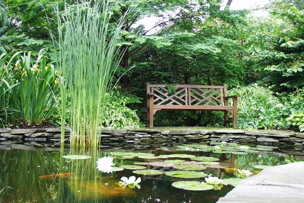andrew-bunting-koi-pond.jpg