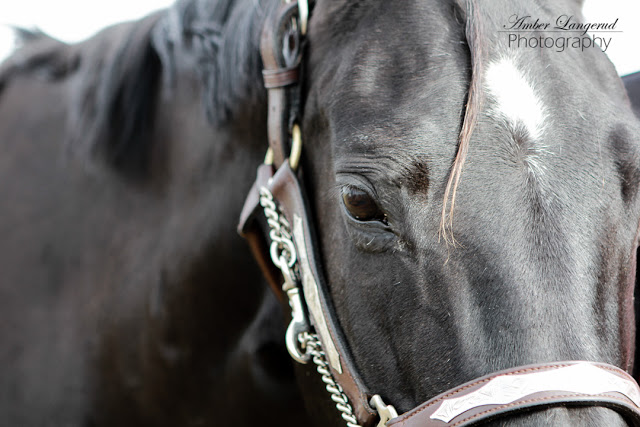 Horse eye picture Detroit Lakes, Fargo/Moorhead Photographer. family pictures, Engagement pictures, Outdoor couple photography, farm photography  Portrait Photography.  Senior Pictures. Beauty style portraits.   Look great in your pictures.
