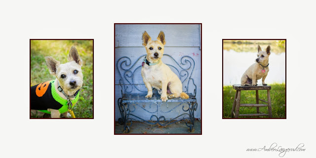 Outdoor Dog Portraits; vintage props; Dog Wall Display; Detroit Lakes Photographer