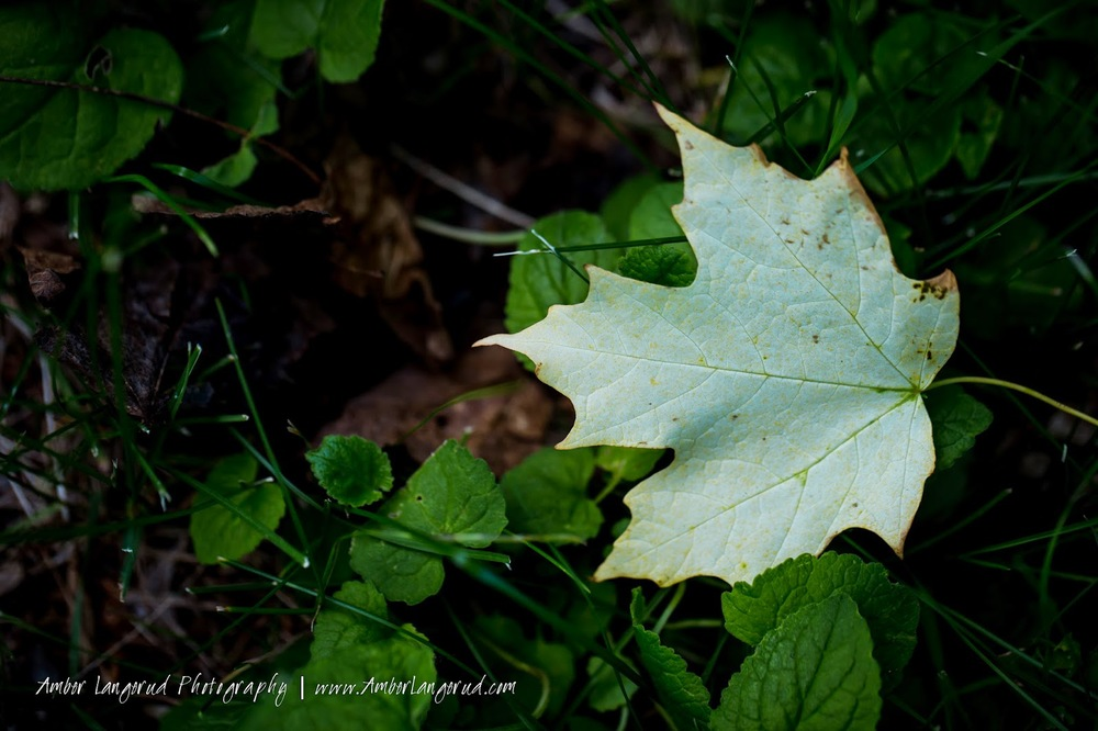 Macro Shots | Detroit Lakes Area Photographer