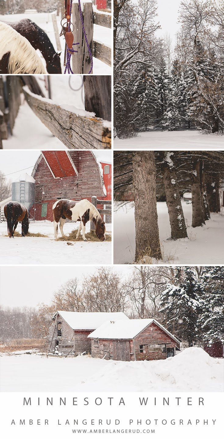 Detroit Lakes area Photographer | Minnesota Winter | Horses in the Snow