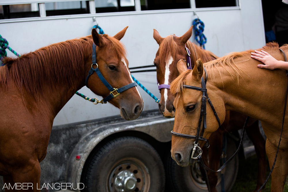 Horses by Trailer | Detroit Lakes Equine Photographer
