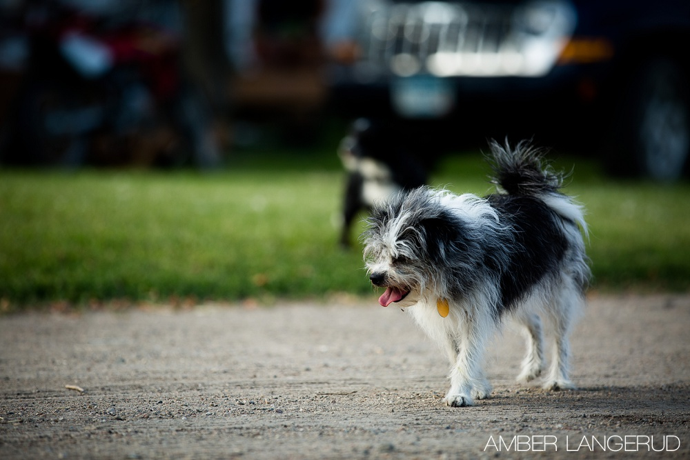 Dogs_4thOfJuly
