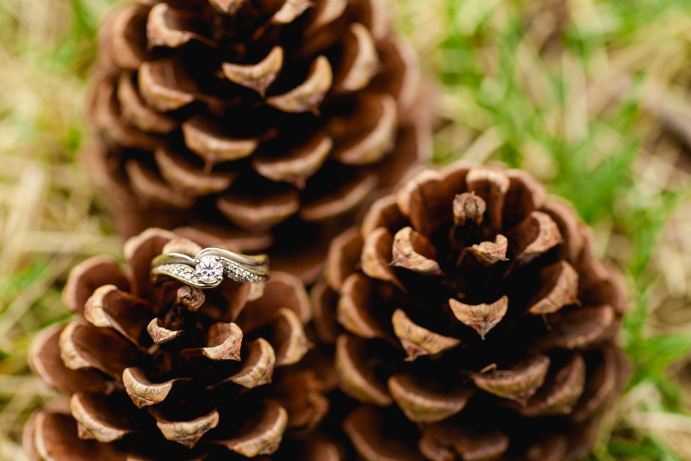 A Creative Photography Pinecone & Flash Test Shoot with Amber Langerud Photography - Natural light image