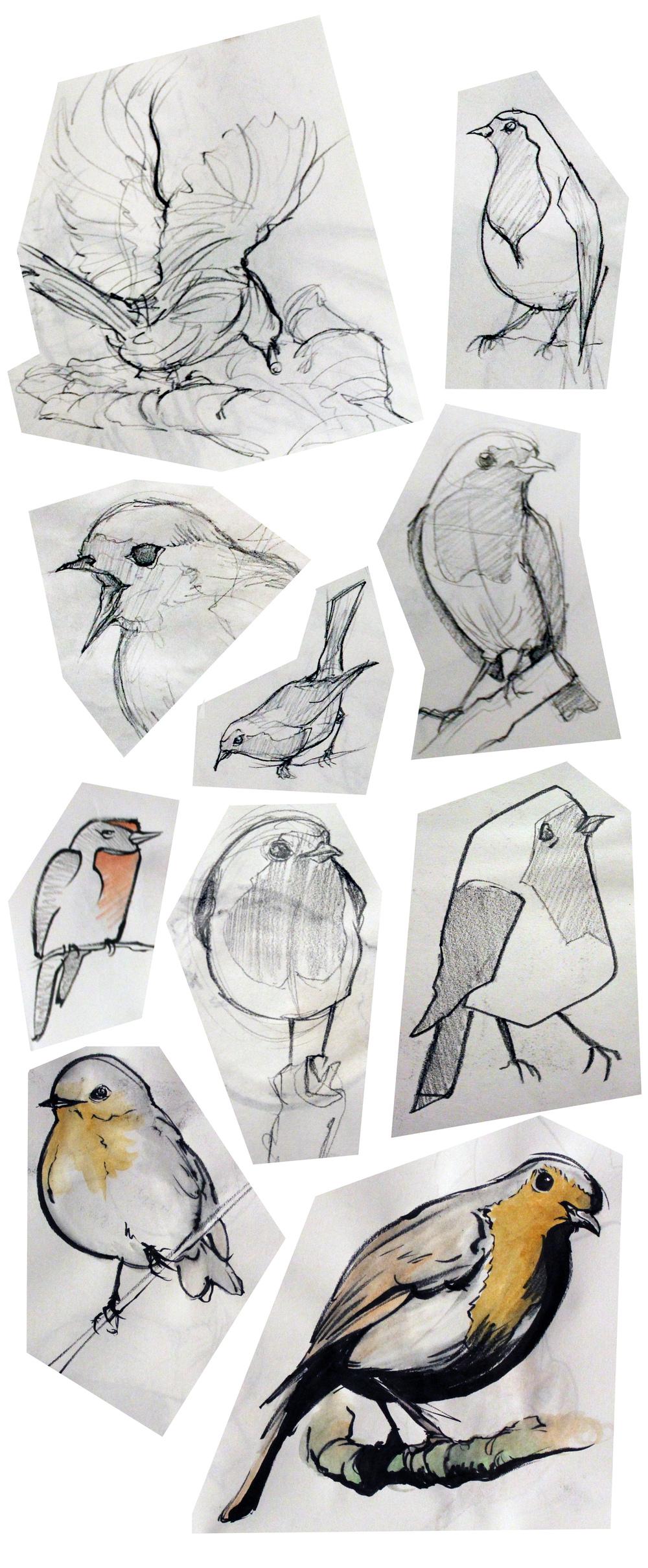Robin Studies