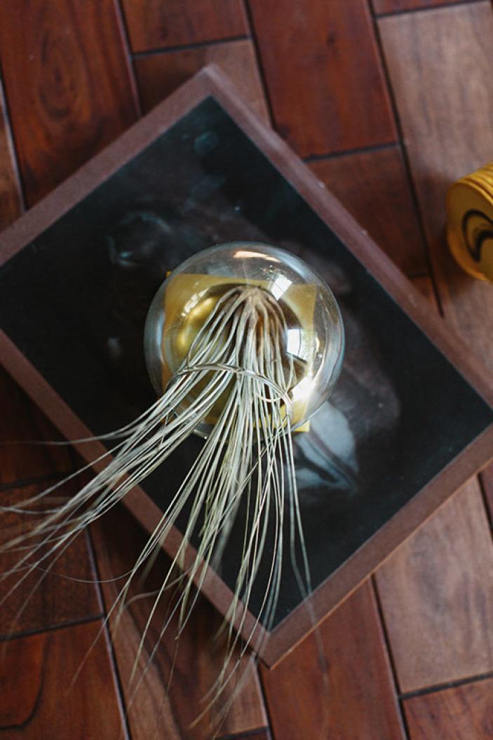 terrarium-globe.jpeg