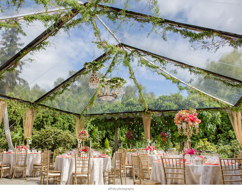 Vines Climbing Up Clear Top Tent with Chandeliers at this DeLille Cellars Wedding