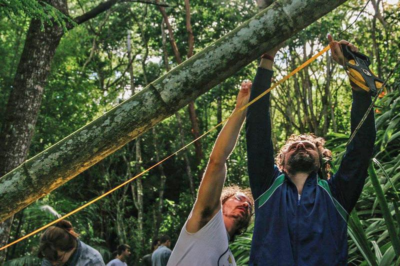bambu11.jpg