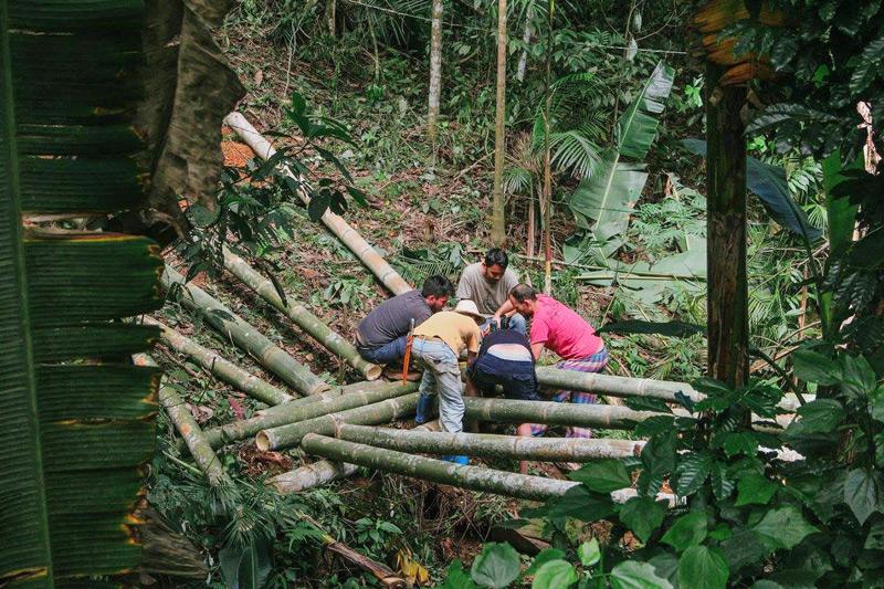 bambu20.jpg