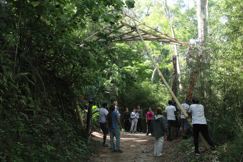 bambu29.jpg