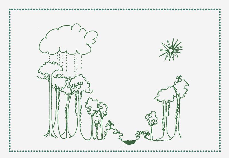 reforest_back+1.jpg